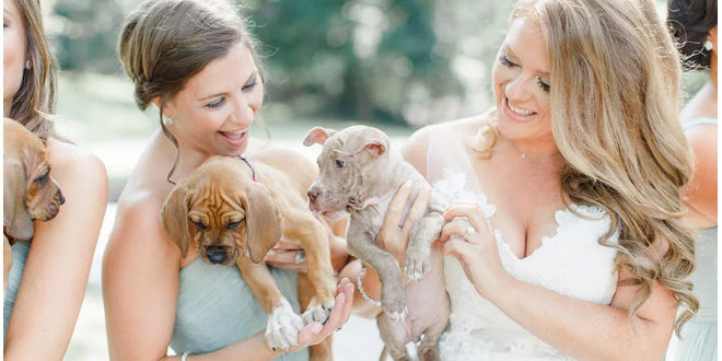 This Wedding Party Had Rescue Puppies Instead Of Flowers