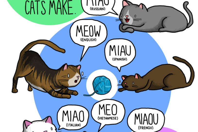 Why Do Animal Sounds Different In Different Languages?